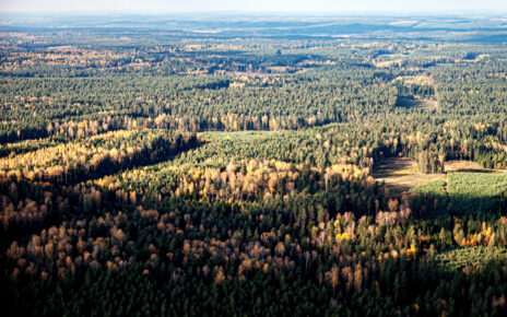 widok lasu z góry